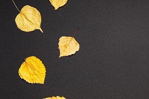 Yellow leaves pattern black paper ba