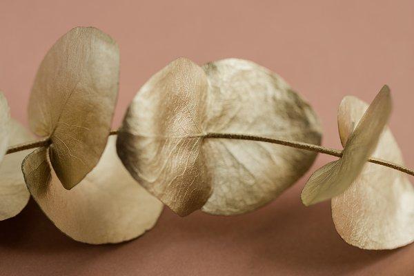 Festive Botanical Photo