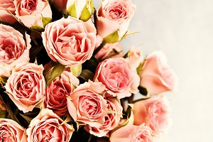 Bunch of pink spray roses on grey, t