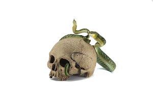 Snake on the skull Halloween concept