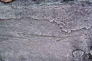 Frozen wood surface