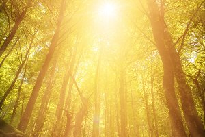 Rays and sunlight through the forest