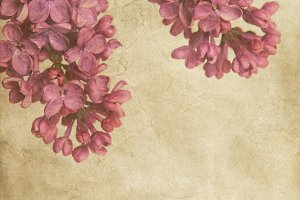 lilac flowers with texture