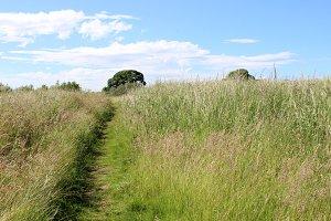 Landscape Grassland Footpath