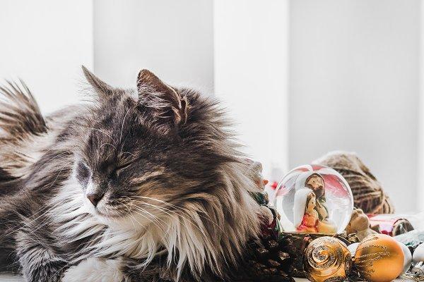 Animal Stock Photos: Svetlana Barchan - Charming kitten and Christmas