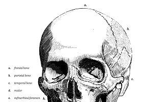 Human Skull Bones tattoo