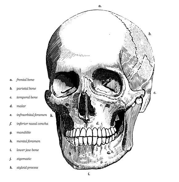 Human Skull Bones Tattoo Illustrations Creative Market