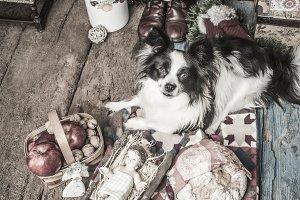 Dog and Baby Jesus Christmas card.