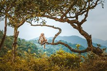 Monkey on Tree by  in Animals