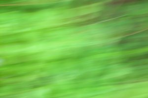 Soft Green Abstract