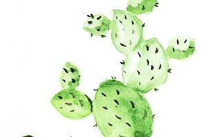 Watercolor hand drawn cactus