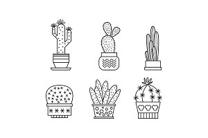 Collection of cactuses and