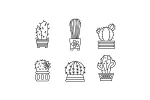Collection of cactuses, succulent
