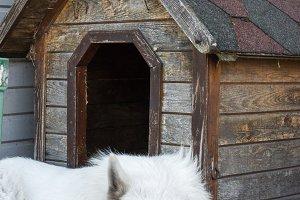 Swiss Shepherd dog is sitting near