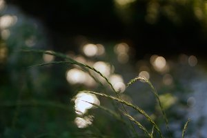 bokeh morning