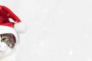 Christmas banner, funny Santa cat