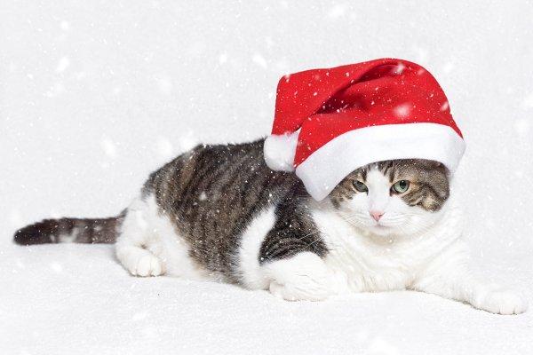 Christmas cat in red Santa Claus ha…