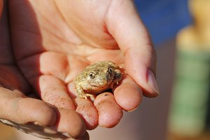 Hand and frog