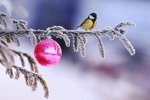 рождественская птица на ели