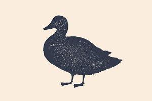 Duck, silhouette. Vintage logo