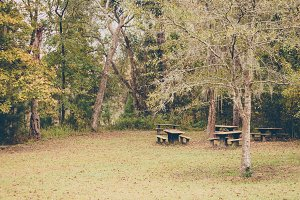 Picnic Tables in a Park