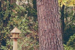 Garden Bench Under Tree