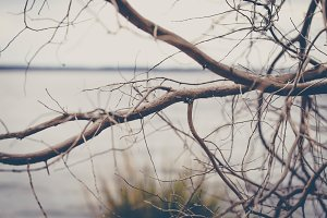 Branches on the Coast