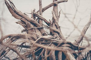 Tangled Driftwood Branches