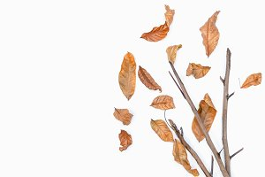 Autumn of brown dry leaf on white ba
