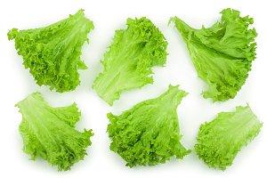 Lettuce leaf isolated on white