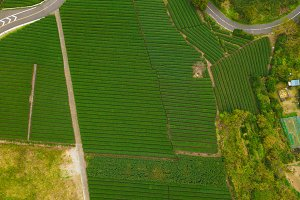 Aerial view of rice field in Shizuok