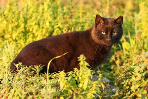 cat with green eyes in the grass