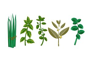 Fresh culinary herbs, fresh green