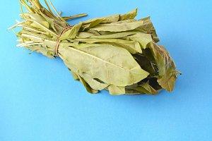 arugula leaves