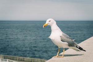 Seagull at the harbor