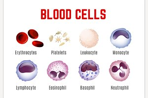 Blood Cells Poster