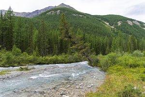 Altai Mountains. The Shawla River.