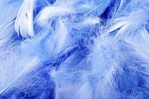 blue decorative feathers