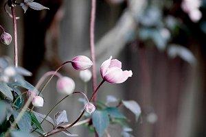 Budding Flower Stock Photo