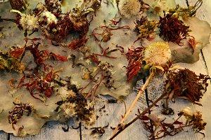 Dry aster flower seeds