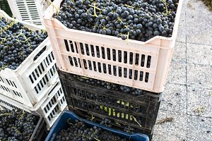 Crates with red grape
