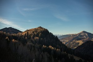 View on the trees on the dolomites