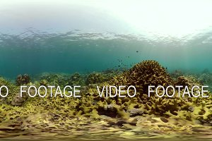 Coral reef and tropical fish vr360