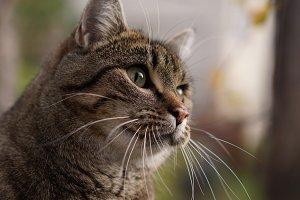 Kimmi the cat