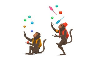 Circus trained monkey juggling balls