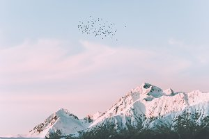 Snowy mountains and birds flying