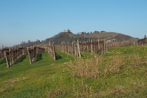 Roero hills in Piedmont