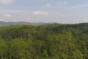 tropical landscape rainforest and