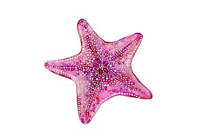 Pink Starfish - Beach House Wall Art