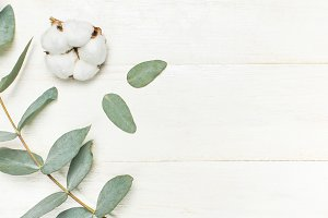 Eucalyptus twigs and cotton flower